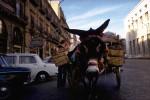 A23-Donkey1